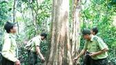 Từ chiến khu đến chiến khu - Bài 4: Ba thế hệ đảng viên cùng giữ rừng