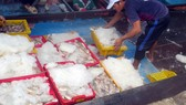 Cá vận chuyển lên bờ ở cảng cá Phước Tỉnh (Bà Rịa - Vũng Tàu)