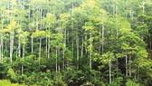 Cà Mau: Trên 5.000 hộ gia đình và cá nhân được giao đất, giao rừng