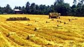 Đề xuất Thanh Hóa vào quy hoạch vùng sản xuất gạo xuất khẩu