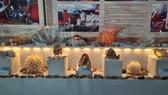 Những vỏ ốc từ quần đảo Hoàng Sa – Trường Sa giữa lòng Đà Nẵng