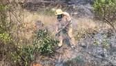 Dập tắt vụ cháy rừng thông ở Quảng Nam