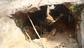 Một mỏ vàng khai thác trái phép tại xã Tam Lãnh (huyện Núi Thành, tỉnh Quảng Nam)