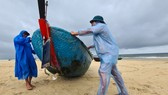 Tỉnh Quảng Nam yêu cầu các đơn vị hướng dẫn người dân đưa tàu thuyền đến nơi an toàn
