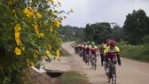 Độc đáo đường hoa dã quỳ nơi miền tây Quảng Trị