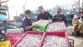 Cá cơm về nhiều, ngư dân Quảng Trị phấn khởi