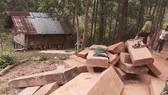 Số gỗ được phát hiện ở khu vực bìa rừng..