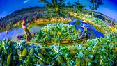 Bàn cách giảm chi phí cho nông sản ĐBSCL