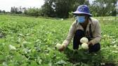Hậu Giang: Nỗ lực kết nối đầu ra cho nhiều nông sản
