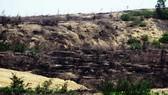 Tạm dừng dự án điện gió để mất trên 140ha rừng