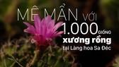 Mê mẩn với 1.000 giống xương rồng tại Làng hoa Sa Đéc