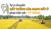 Tự ý chuyển đất trồng lúa sang đất ở phạt tiền tới 1 tỷ đồng
