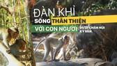 Đàn khỉ sống thân thiện với con người dưới chân núi Kỳ Vân