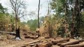 Số gỗ được phát hiện tại tiểu khu 442, Vườn quốc gia Yok Đôn