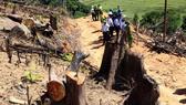 Một doanh nghiệp chứa khoảng 30m³ gỗ nghi gỗ rừng bị tàn phá ở An Lão