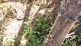 Vợ chồng bị điện giật chết ở hàng rào thép gai: Nhập nhằng về chủ nguồn điện