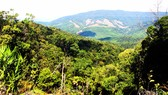 Hơn 300 tỷ đồng để tái thiết rừng ở Bình Định