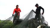 Người nuôi cá ở Sông Cầu tất bật bán cá chạy bão số 12