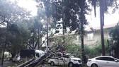 Những thiệt hại ban đầu của cơn bão số 12