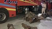 Số gỗ nghi là gỗ trắc bị lực lượng chức năng phát hiện và thu giữ