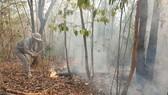 Khẩn trương hoàn chỉnh hồ sơ, khởi tố vụ án cháy rừng tại Quảng Nam
