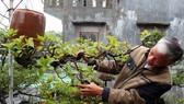 Khám phá vườn bonsai mọc ngược giữa phố