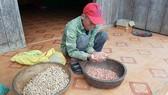 Quảng Bình: Đề nghị xử lý Chủ tịch huyện đưa giống dỏm về cho dân nghèo