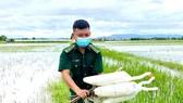 Quảng Bình: Đồng loạt tháo gỡ hàng chục ngàn bẫy chim tự nhiên