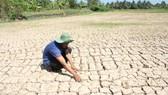 Hạn hán, xâm nhập mặn, thiếu nguồn nước ngọt từ sông Mê Công đổ về... đã gây ra những thiệt hại nặng cho sản xuất lúa ở các tỉnh ĐBSCL trong  mùa khô năm 2016 vừa qu