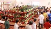 Nhiều người đến tham dự lễ hội trái cây