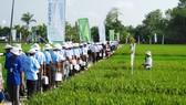 Viện Lúa ĐBSCL hợp tác phát triển giống lúa bền vững