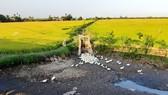 Chuyển 50.000ha đất lúa bị hạn mặn sang trồng cây con khác