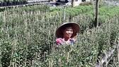 Giá trị sản xuất ngành trồng trọt ở Đồng Tháp tăng 508 tỷ đồng