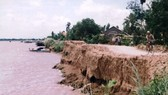 Cử tri bức xúc tình trạng khai thác cát và cò lúa