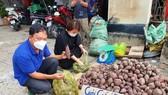 Đẩy mạnh tiêu thụ khoai lang cho nông dân với giá 3.000 - 5.000 đồng/kg