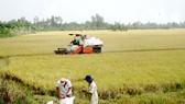 Xây dựng chuỗi giá trị cho hạt gạo