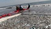 Hạn chế khai thác thủy sản gần bờ ở huyện Cần Giờ