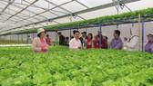 Trang trại trồng rau sạch chuyên cung cấp cho  Trung tâm phân phối Mega Market