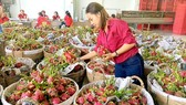 Vegetables, fruits exports post good growth