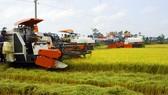 Hau Giang farmers enjoy bumper crop of rice