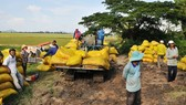 Farmers in the Mekong Delta provinces enjoy a bumper crop of rice. (Photo: SGGP)