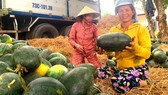 Farmers in central provinces enjoy bumper crops, high prices