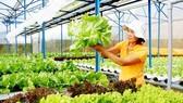 Da Lat vegetable, flower market recovers