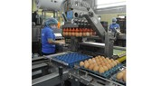 The egg processing line of an enterprise in HCMC (Photo: SGGP)