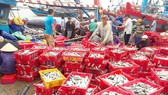 Thuan An Fishing Port in Thua Thien – Hue Province is crowded with sellers and buyers. (Photo: SGGP)