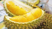 Cai Mon durians granted geographical indications