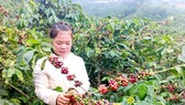 Chinese enterprises have demand for Vietnamese coffee, aquatic products