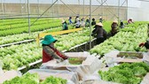 High-tech agricultural production helps farmers get rich in Lam Dong Province. (Photo: SGGP)