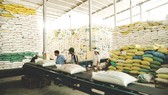 Export prices of rice fall, causing anxiety to many enterprises