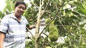 Farmers in Cho Lach District earn high income from sapling production